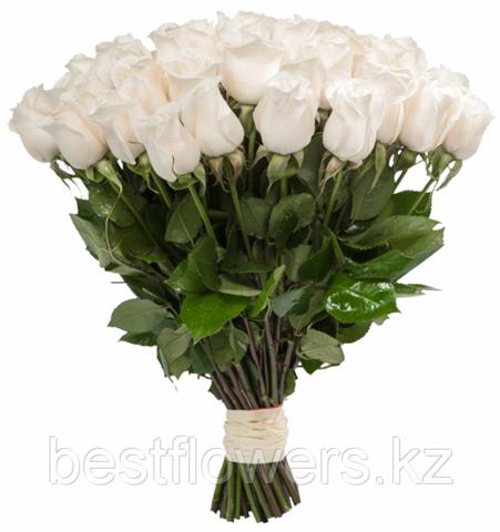 Букет из 51 белой, Голландской, метровой розы