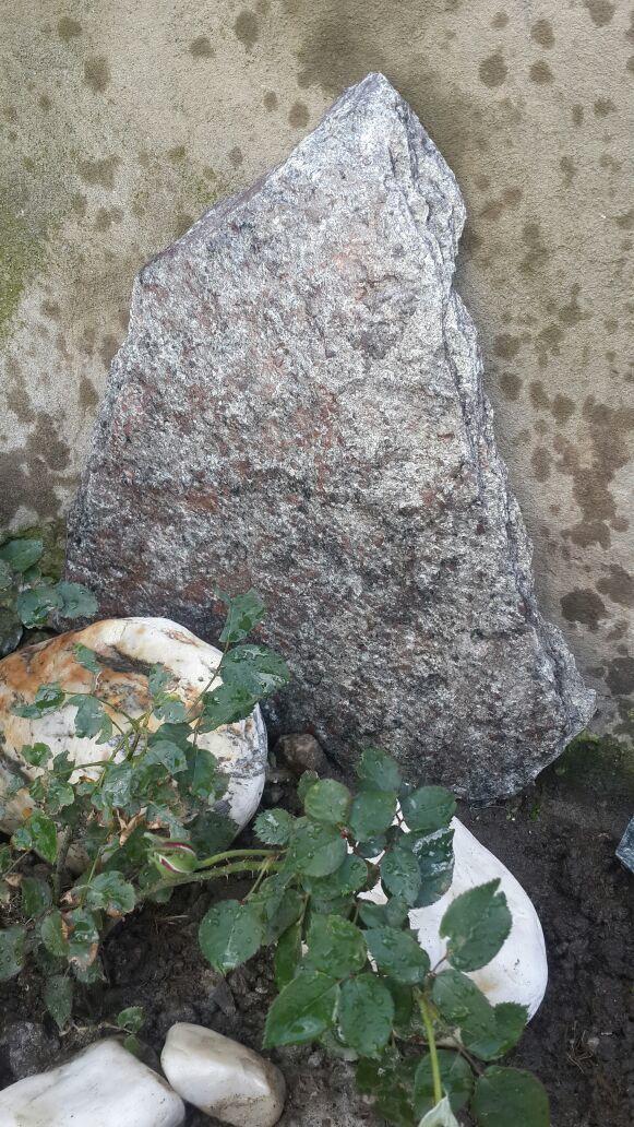 Сланец пластушка Серебристый камень образец