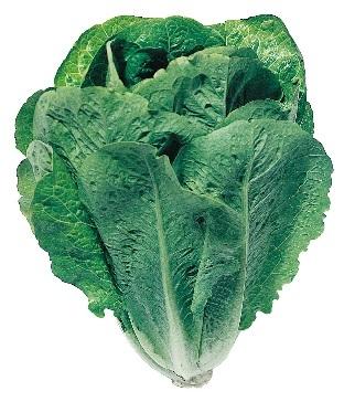Салат Лираз семена салата айсберг (Hazera / Хазера) Лираз.jpg