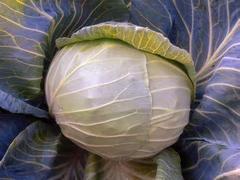 Грандслам F1 семена капусты белокочанной (Sakata / Саката)