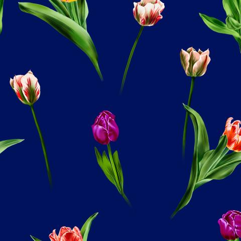 тюльпаны_03