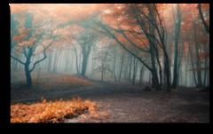 "Постер ""Туманный лес"""