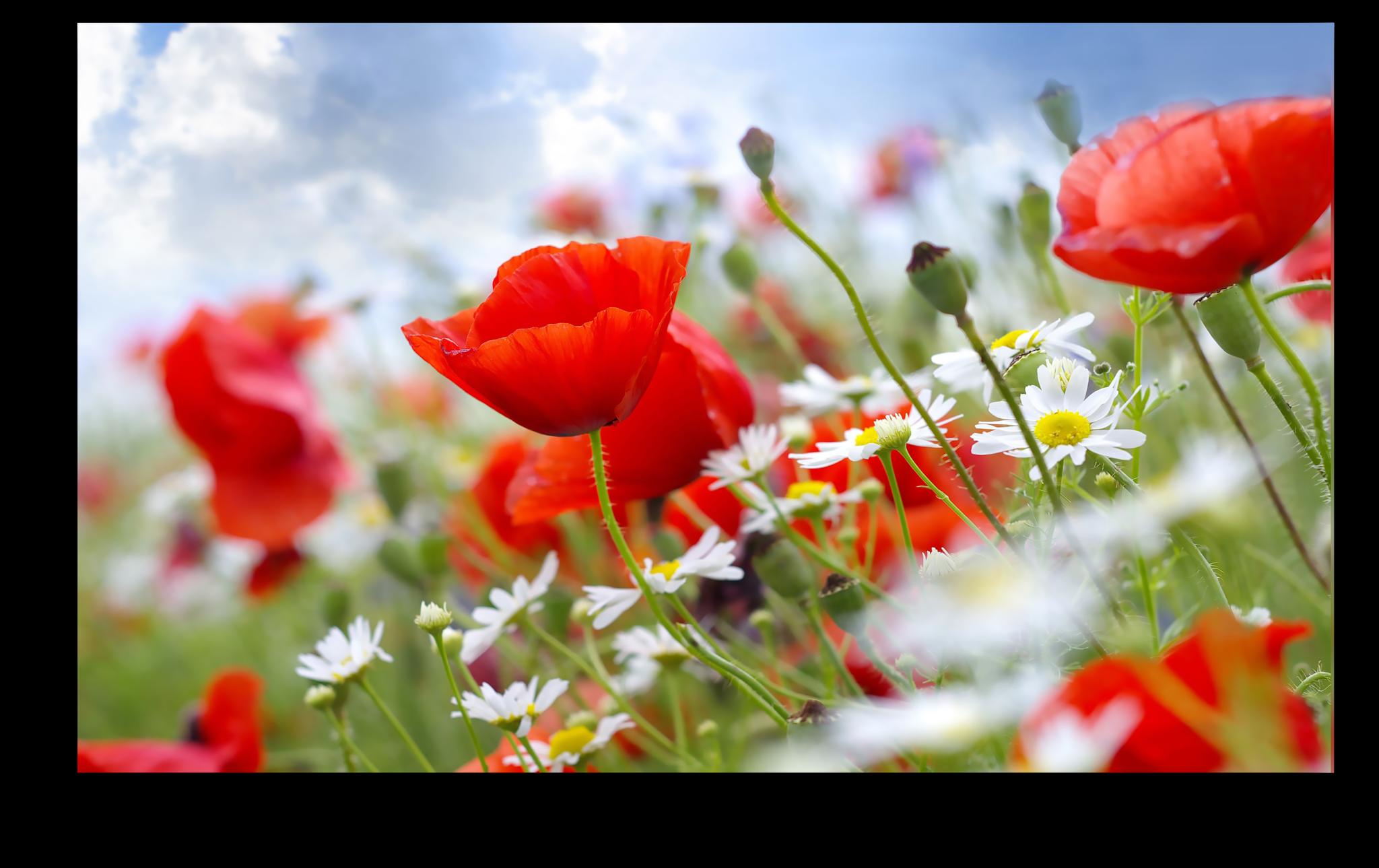 """Постеры Постер """"Цветочная полянка"""" п98.png"""