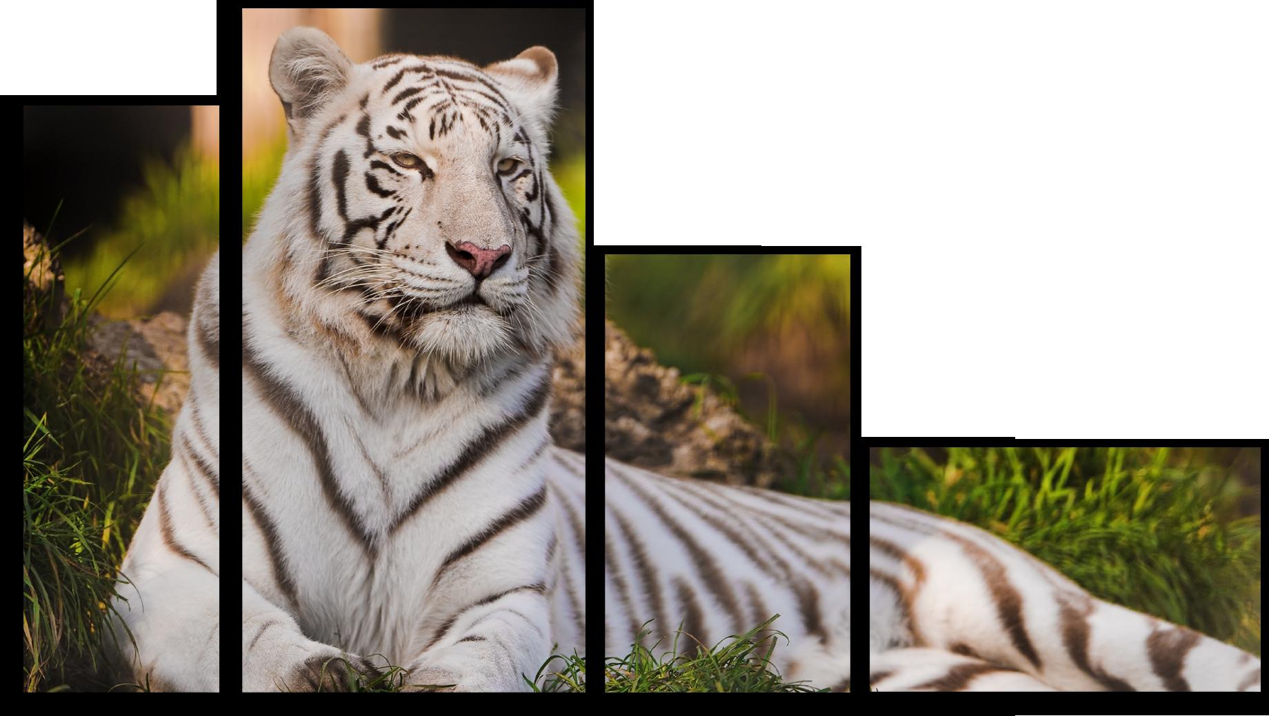 """Модульные картины Модульная картина """"Амурский тигр"""" М256.png"""