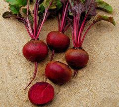 Гренад F1 семена свеклы (Vilmorin / Вильморин)