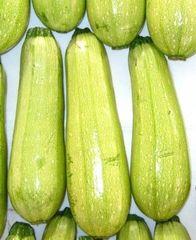 Амджад F1 семена кабачка (Seminis / Семинис)