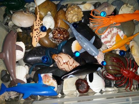 Морские жители и море