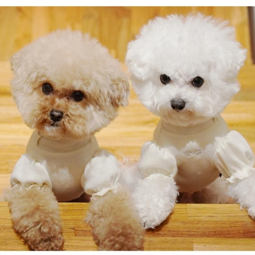 домашние костюмы для маленьких собачек