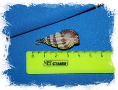 Подвеска из морской ракушки