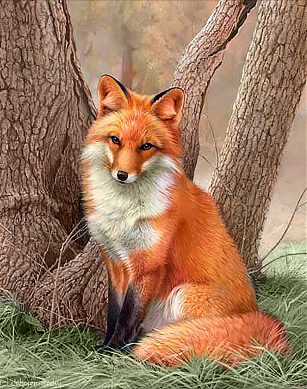 него картинки с красивыми лисичками будущем