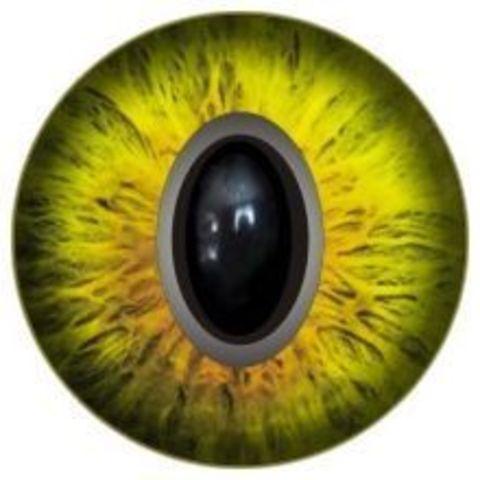 Глаза для игрушек, 10 мм