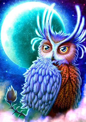 Картина раскраска по номерам 40x50 Удивительная сова