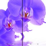 Кухня Олива ШВ 600 Шкаф верхний - орхидея