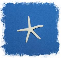 Морская Звезда Фингер 5-6 см