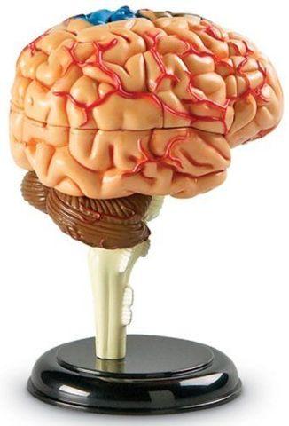LER3335 Конструктор Анатомия человека Мозг Learning Resources