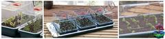 Пропагатор GARLAND Small High Dome Propagator, GARLAND, Пропагатор, GARLAND, Growmir.ru, гроумир, гровмир, Growmir, купить систему для выращивания растений, установка для выращивания растений,  проращиватель, теплица, мини - теплица, проращиватель семян, купить проращиватель семян, черенки прорастить, прорастить семя, семечко,