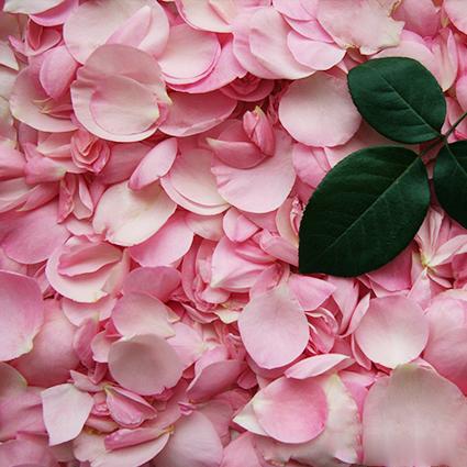 Розы пионовидные Mariatheresia от 9шт