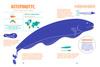 razvorot-elektricheskie-ryby2
