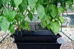 Аэропонная система Amazon Single, Amazon, систему амазон, amazon aeroponic, система аэропоническая, аэропонная система, Growmir.ru, гроумир, гровмир, Growmir, купить систему для выращивания растений,