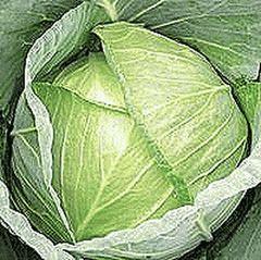 Форсаж F1 семена капусты белокочанной (Гавриш)