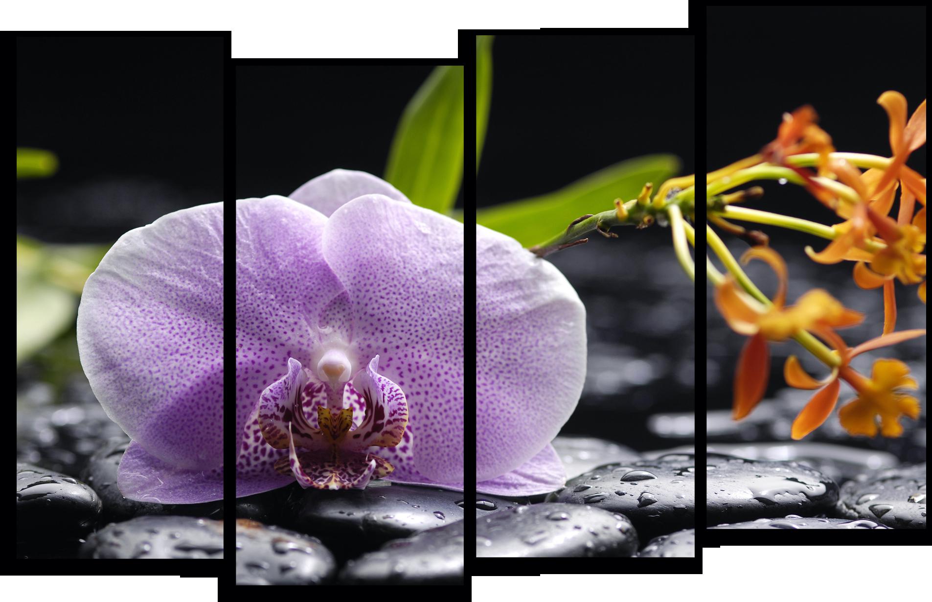 """Цветы Модульная картина """"Орхидея и черные камни"""" М761.png"""