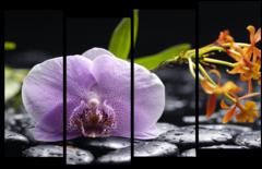 """Модульная картина """"Орхидея и черные камни"""""""