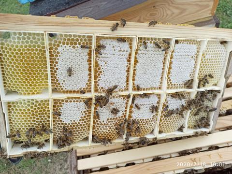 Сотовый мёд в минирамках (примерно 200гр)