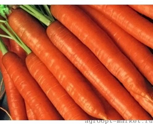 Nunhems Топкат F1 семена моркови император (Nunhems / Нюнемс) топкат.jpg