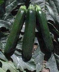 Кандела F1 семена кабачка (Sakata / Саката)