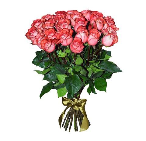 25 Голландских роз Игуазу