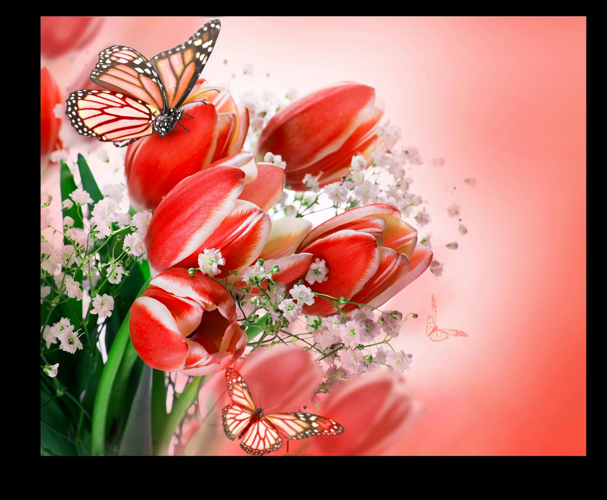 """Постеры Постер """"Красные тюльпаны"""" п70.png"""