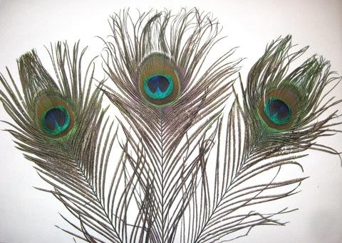 Перья павлина  с крупным глазком ,  01 натуральный (длина около 25 см.)