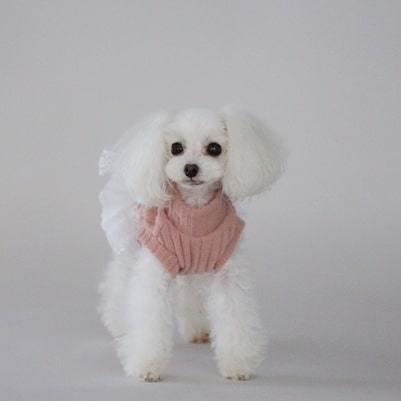 BH - Платье для собак
