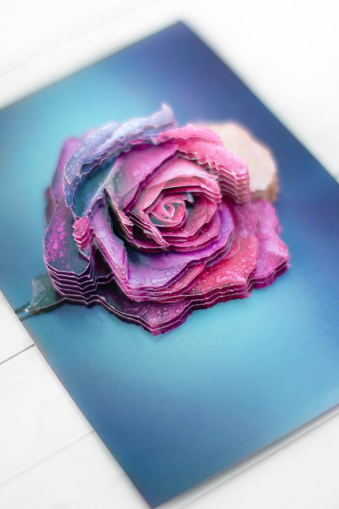 Радужная роза - готовая работа, детали сюжета.