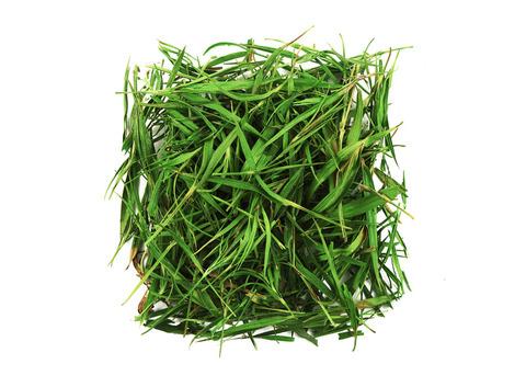 Листья бамбука. Интернет магазин чая