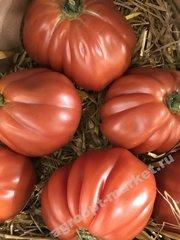 Ругантино F1 семена томата индетерминантного (Rijk Zwaan / Райк Цваан)