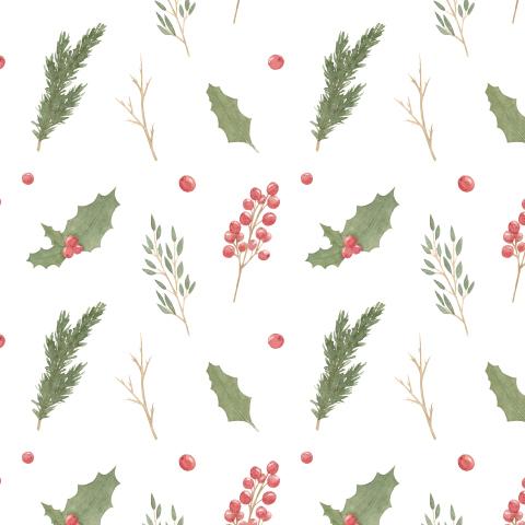 Новогодние растения на белом