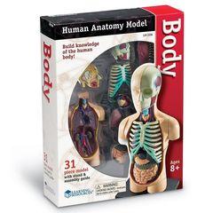 Конструктор Анатомия человека. Тело, Learning Resources