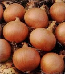 Универсо F1 семена лука репчатого (Nunhems / Нюнемс)