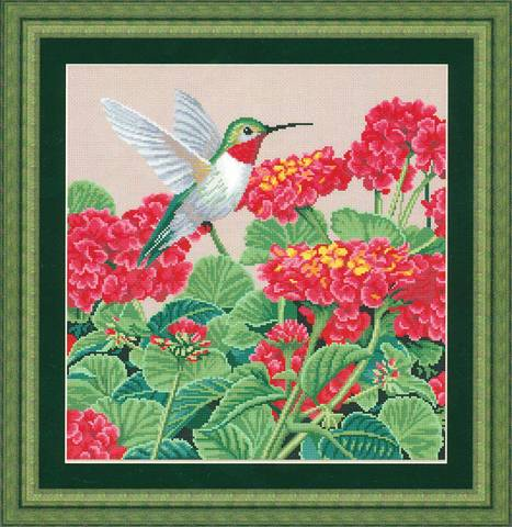 Великолепие колибри