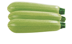 Марселла F1 семена кабачка (Enza Zaden / Энза Заден)