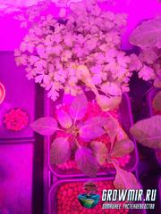Гидропонная система Wilma - выращиваем зелень дома.