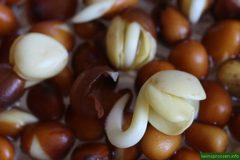 Редис Дайкон семена BIO, 100 гр (Италия)