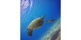 Набор фильтров PolarPro Aqua 3-Pack HERO 5/6/7 Black под водой