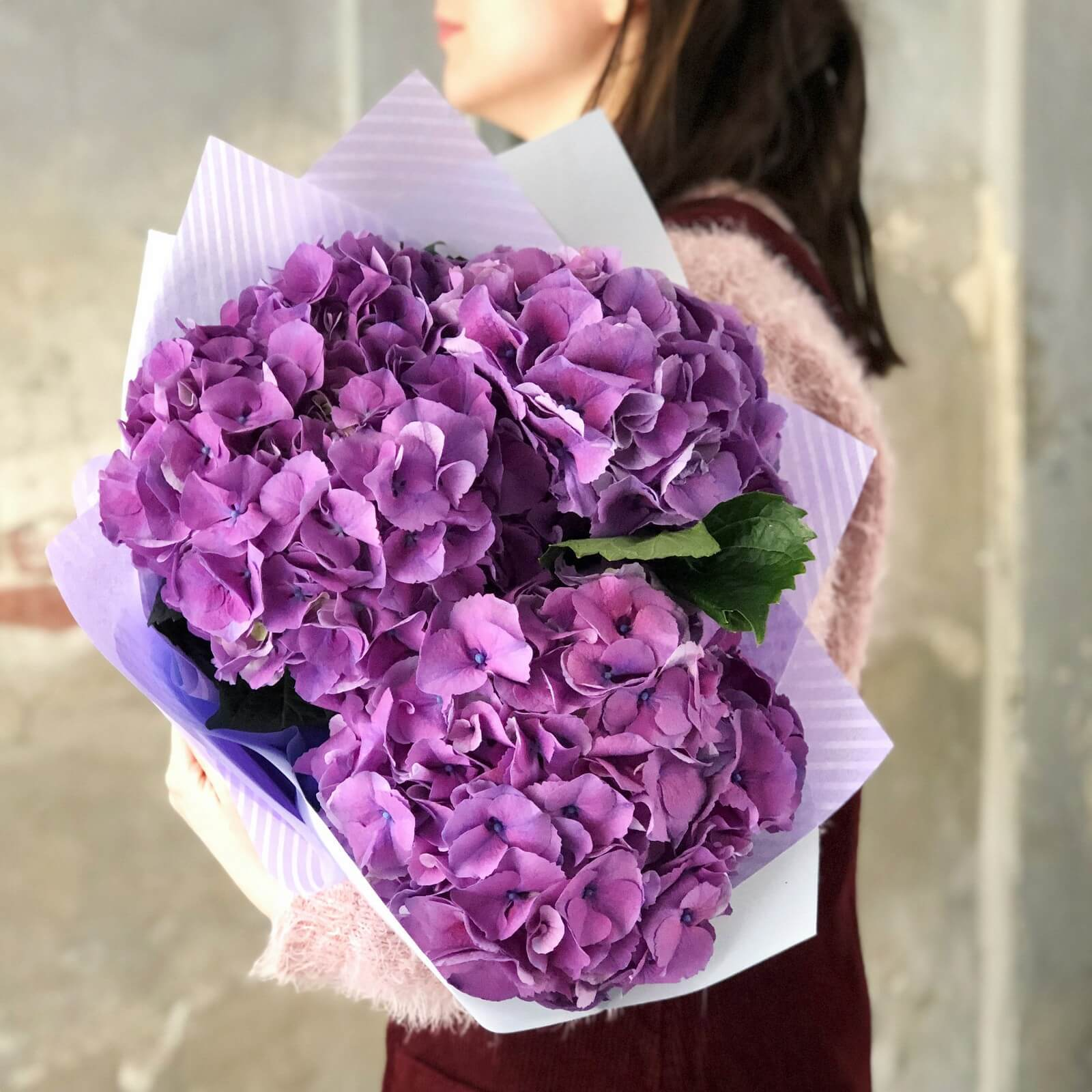 фіолетова гортензія