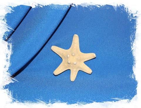 Морская звезда рогатая