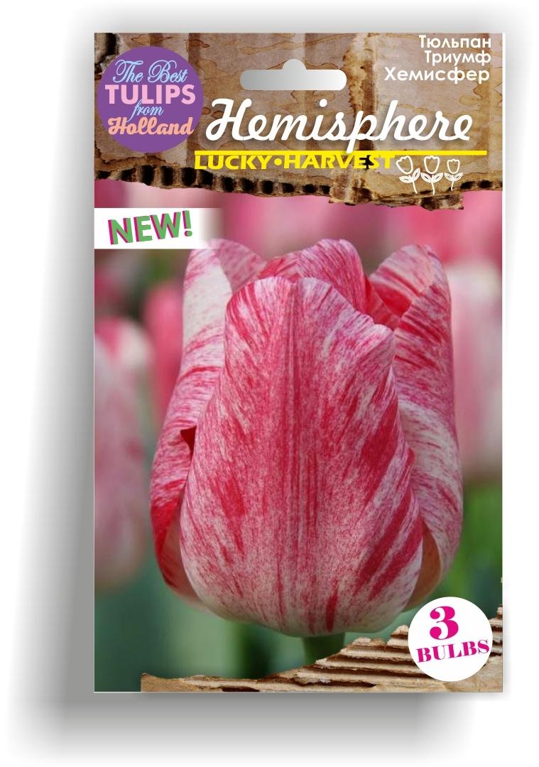 Тюльпан Триумф Hemisphere (Хемисфер) Нидерланды 3 шт