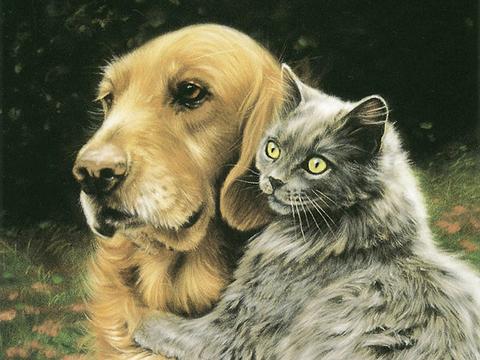 Картина раскраска по номерам 50x65 Кошка и собака обнимаются