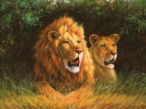 Алмазная Мозаика + Багет 40x50 Лев и львица