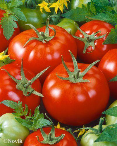 Гавриш Бабай F1 семена томата детерминантного (Гавриш) Бабай_семена_овощей_оптом.jpeg